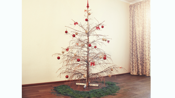 An old Christmas tree with no needles